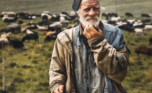 Fototapeta Male old shepherd is looking at camera on herd background