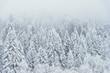Leinwanddruck Bild - Landscape view of snowy hills with pine trees.