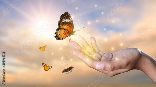 Fotografie, Obraz  a butterfly leans on a hand among the golden light flower fields in the evening
