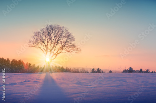 Fond de hotte en verre imprimé Taupe Winter sunset over the snow covered tree.Nature background.