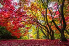 Colorful Leaves On Autumn Tree...