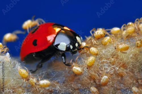 Cadres-photo bureau Papillon Beautiful ladybug and spiders on leaf defocused background