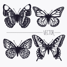 Vector Hand Drawn Ink Illustra...