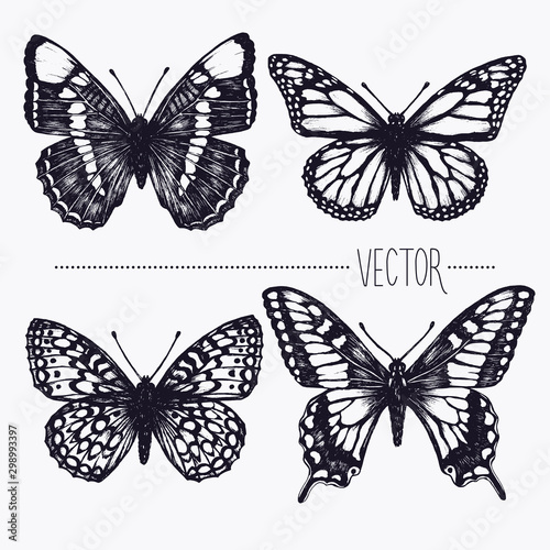 Fotobehang Vlinders in Grunge Vector hand drawn ink illustration. Tropical butterflies. Isolated clip art . Graphic design image for decoration. Engraving style, old fashioned, vintage picture. Nature objects. Entomology. Sketch