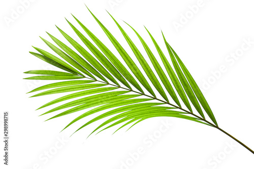 Foto auf AluDibond Palms leaves of coconut isolated on white background