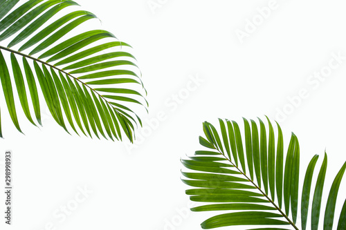 Foto auf Leinwand Palms leaves of coconut isolated on white background