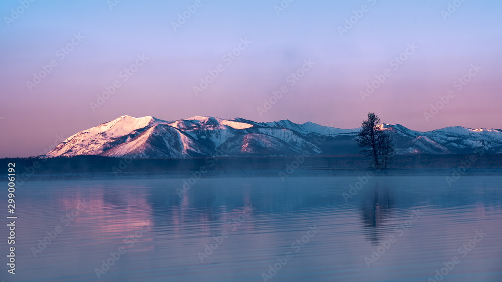 Fototapety, obrazy: The Single Tree of Yellowstone Lake