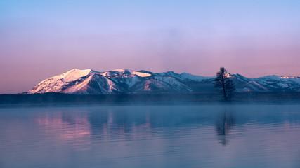 The Single Tree of Yellowstone Lake