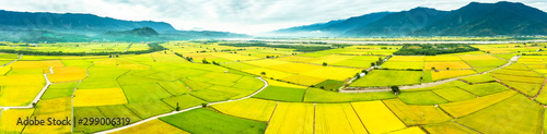 Poster Jaune Aerial view of Beautiful Rice Fields in taitung . Taiwan.