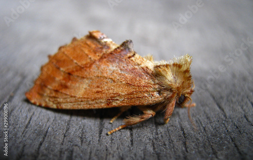 A beautiful moth sits on a wooden surface Canvas Print
