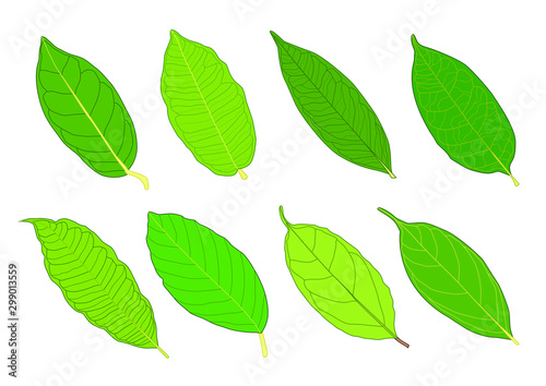 Valokuva  Green Leaves fresh abstract isolated on white background illustration vector
