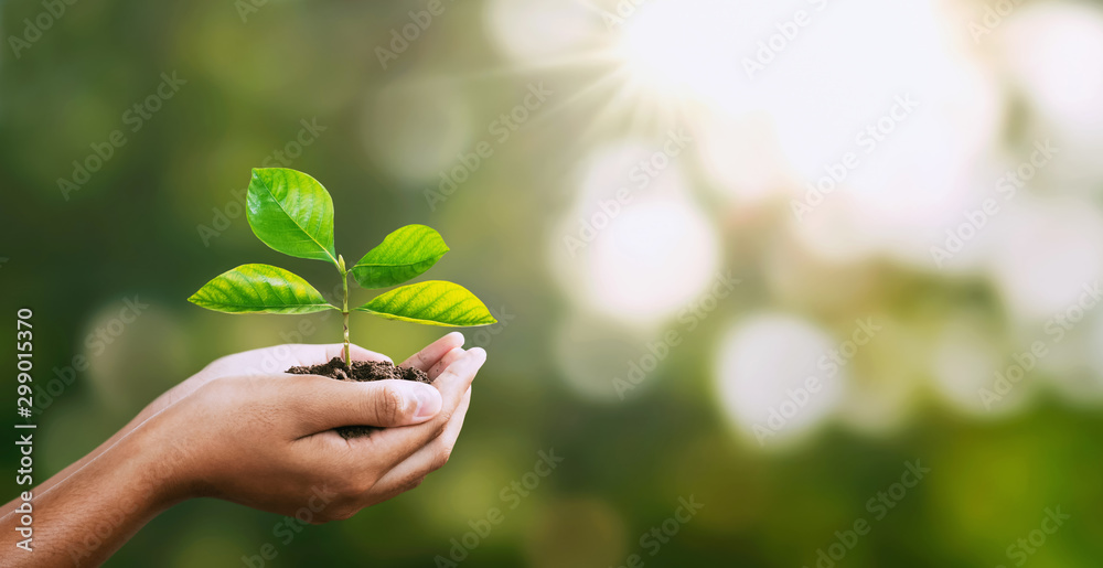 Fototapeta hand holding young plant on blur green nature. concept eco earth day