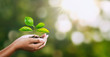 hand holding young plant on blur green nature. concept eco earth day