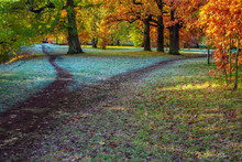 Splitting The Footpath In The Park. Autumn Landscape