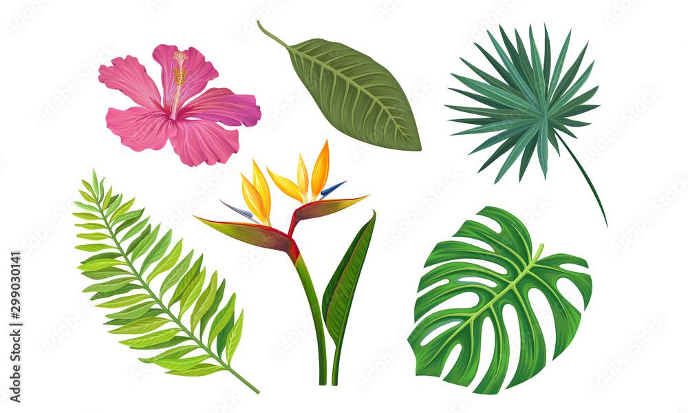 Tropical Plants Vector Illustrated Set. Different Exotic Flora <span>plik: #299030141 | autor: Happypictures</span>