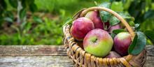 Juicy Ripe Apples In A Wicker ...