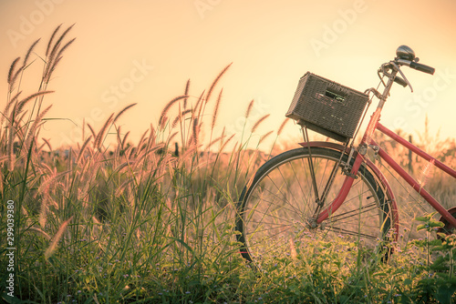 Retro bicycle in fall season grass field, warm meadow tone