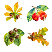 Watercolor Set Of  Nuts On Whi...