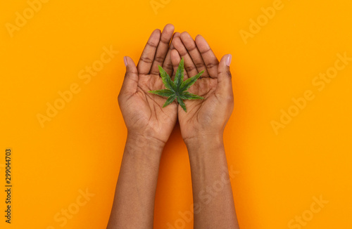 Fényképezés Cannabis leaf in open palms of female over orange background