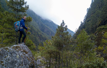 Woman Hiking In The Himalayan Pine Forest