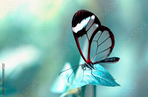Cadres-photo bureau Papillon Beautiful butterfly sitting on flower in a summer garden