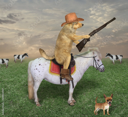 Photo The beige dog cowboy in a brown hat and boots astride the white horse grazes a herd of cows on its ranch