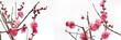 Leinwanddruck Bild - ピンクの梅の花