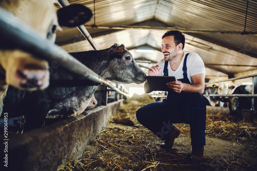 Fotografie, Obraz Handsome caucasian farmer in overall crouching next to calf, using tablet and smiling