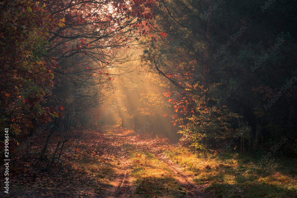 Road in the forest and sunbeams during a foggy autumn morning near Piaseczno, Poland