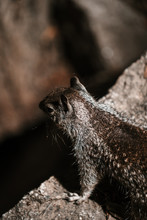 Cute Squirrel In Yosemite National Park From Above