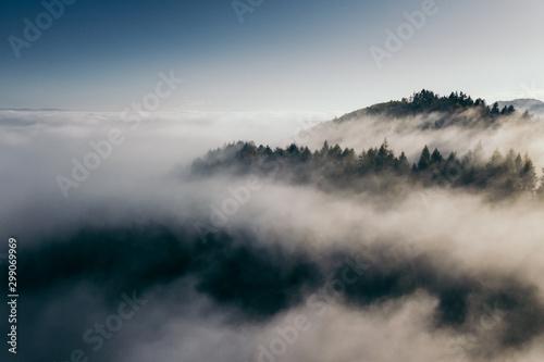 Foto auf Leinwand Rosa dunkel Der Teutoburger Wald im Nebel