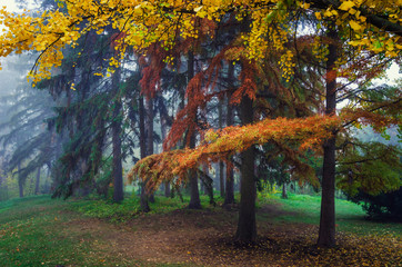 Panel Szklany Eko Colorful autumn scene.