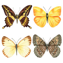 Butterflies On An Isolated White Background, Watercolor Illustration.