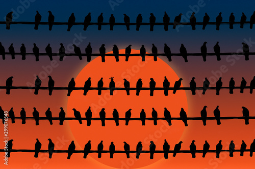 Black silhouettes of Pigeons on sunset background Canvas Print