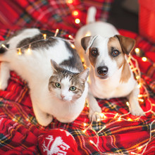 Dog And Cat In Christmas Decoration