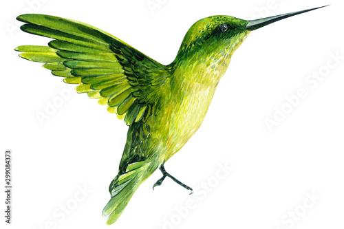 bird on an isolated white background, watercolor illustration, hand drawing, cute hummingbird, beautiful exotic tropical bird