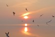 sunset and seagulls flying low over the sea of autumn evening