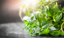 Mint Plant. Bunch Of Fresh Green Mint Leaf On Dark Stone Table Closeup. Selective Focus Leaves Detail. Peppermint In Spring Natural Light Background.