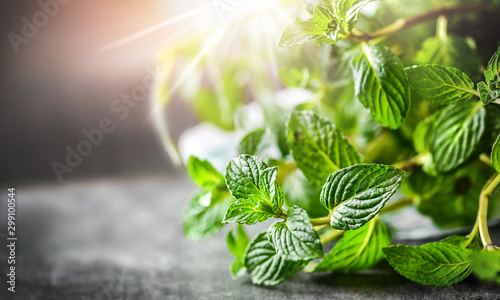 Obraz Mint plant. Bunch of fresh green mint leaf on dark stone table closeup. Selective focus leaves detail. Peppermint in spring natural light background. - fototapety do salonu