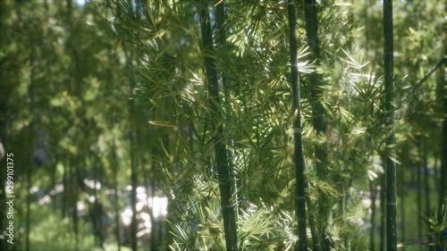 Fotobehang Bamboo Windy Tranquil Arashiyama Bamboo Grove