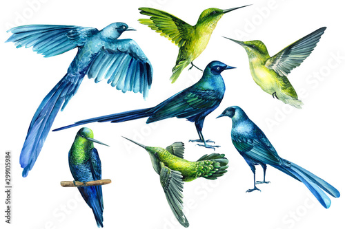 Photo set of tropical birds on an isolated white background, watercolor illustration