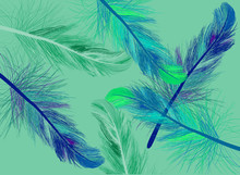 Background From Green And Blue Feathers