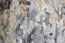 Bark Of A Tree On The Trunk During Autumn - Irregular Colorful Shapes