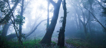 Mystic Primeval Forest In Blue Misty.