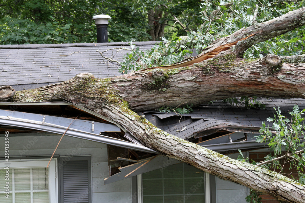 Fototapeta Storm Tossed Tree Impales a House Roof