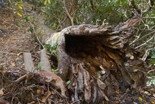 Old Hollow Log, An Inviting Animal Habitat On A Mountain Trail