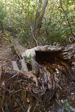 Old Hollowed Out Forest Log With Dark Opening