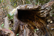 Dark Open End Of An Old Hollowed Out Forest Log