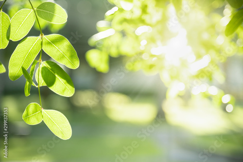 Foto auf Gartenposter Olivgrun Close up of nature view green leaf on blurred greenery background under sunlight with bokeh and copy space using as background natural plants landscape, ecology wallpaper concept.