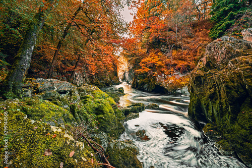 Canvas Prints Forest river Fairy Glen Falls at Autumn in Wales, UK